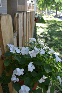 Blooms and other garden progress