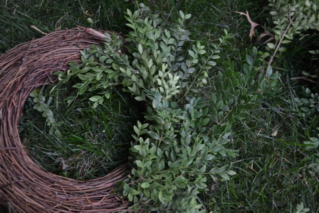 DIY Boxwood Wreath03