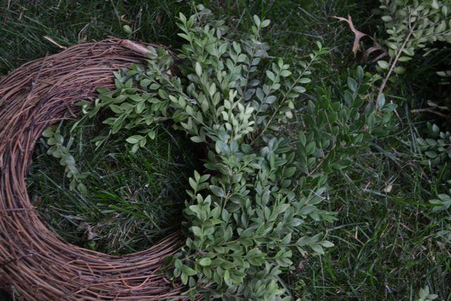 DIY Boxwood Wreath03