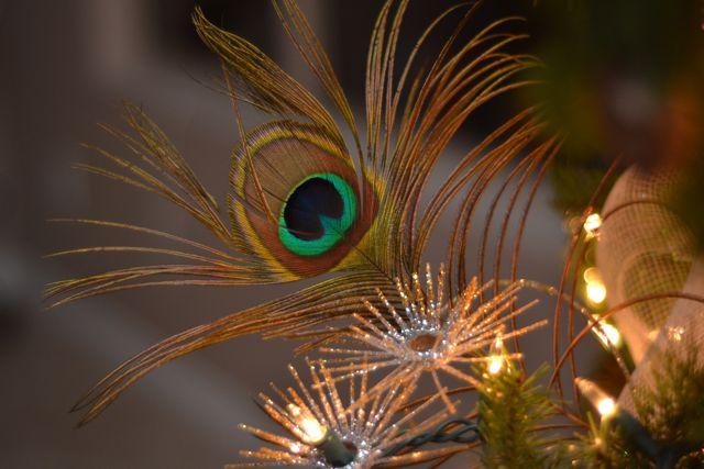 Arizona Christmas Decor04