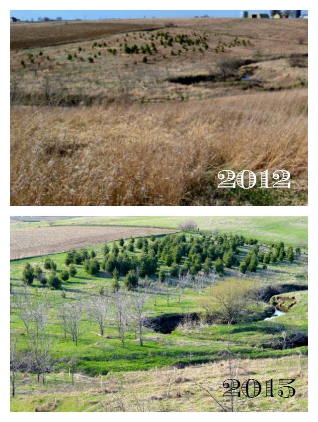 Tree growth 2012 2015 NewlyWoodwards
