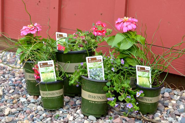 Monrovia flower boxes1