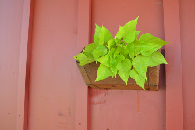 upcycled wall planters3