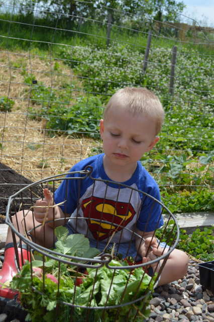 garden newlywoodwards 201510
