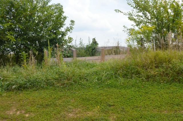 Overgrown garden pictures1