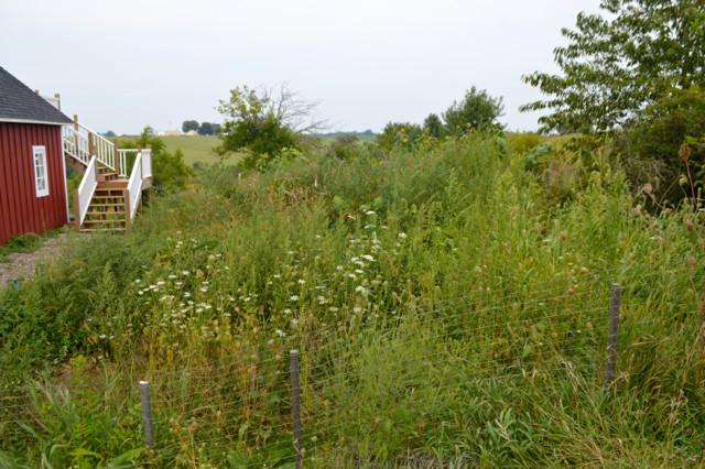 Overgrown garden pictures3