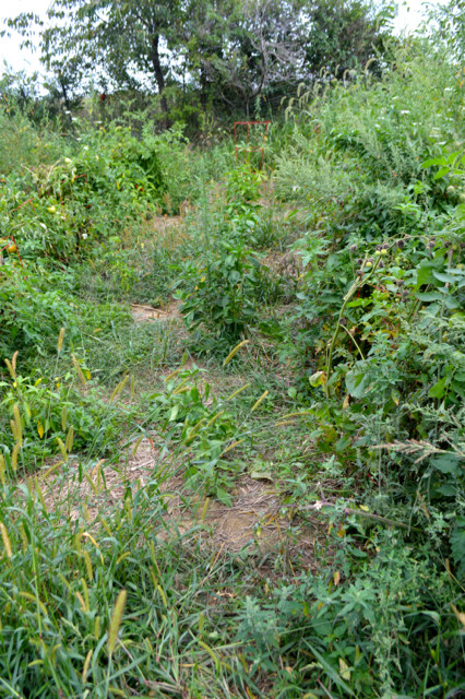 Overgrown garden pictures4