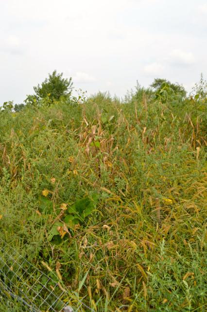 Overgrown garden pictures5