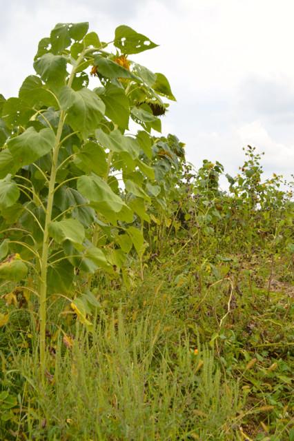 Overgrown garden pictures6