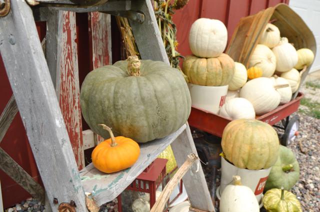 Pumpkins 20153