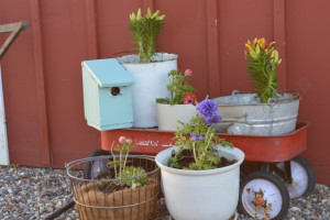 Tips for a longer growing season in the Midwest (planting flowers in April)