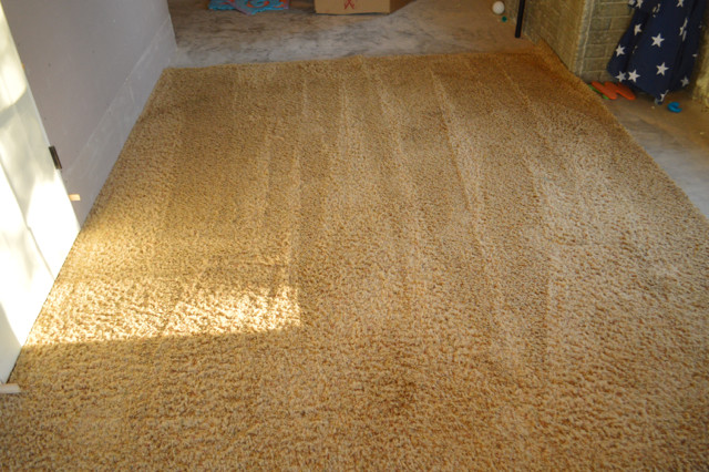 Bissell shampooing rugs12
