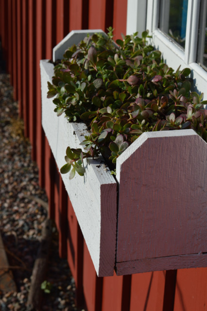 Monrovia succulents in window boxes5