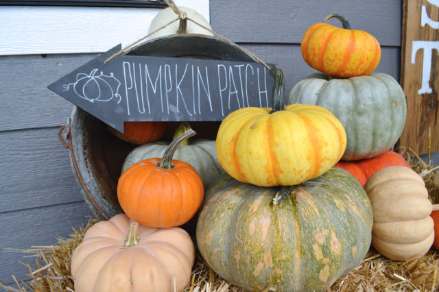 front-porch-fall-decor-pumpkin-topiaries03