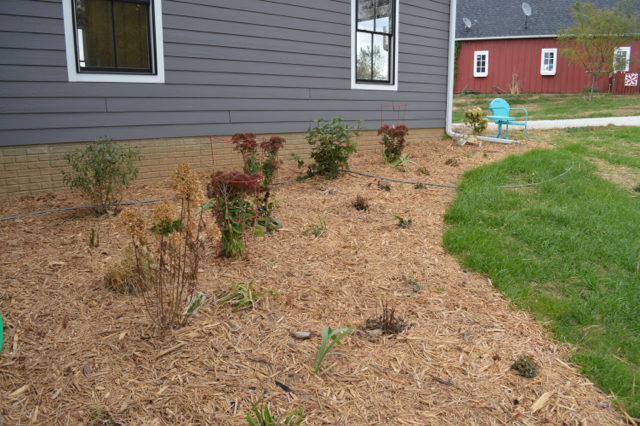 landscaping-on-a-budget4