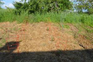 Six ways we cut down weeds in the garden